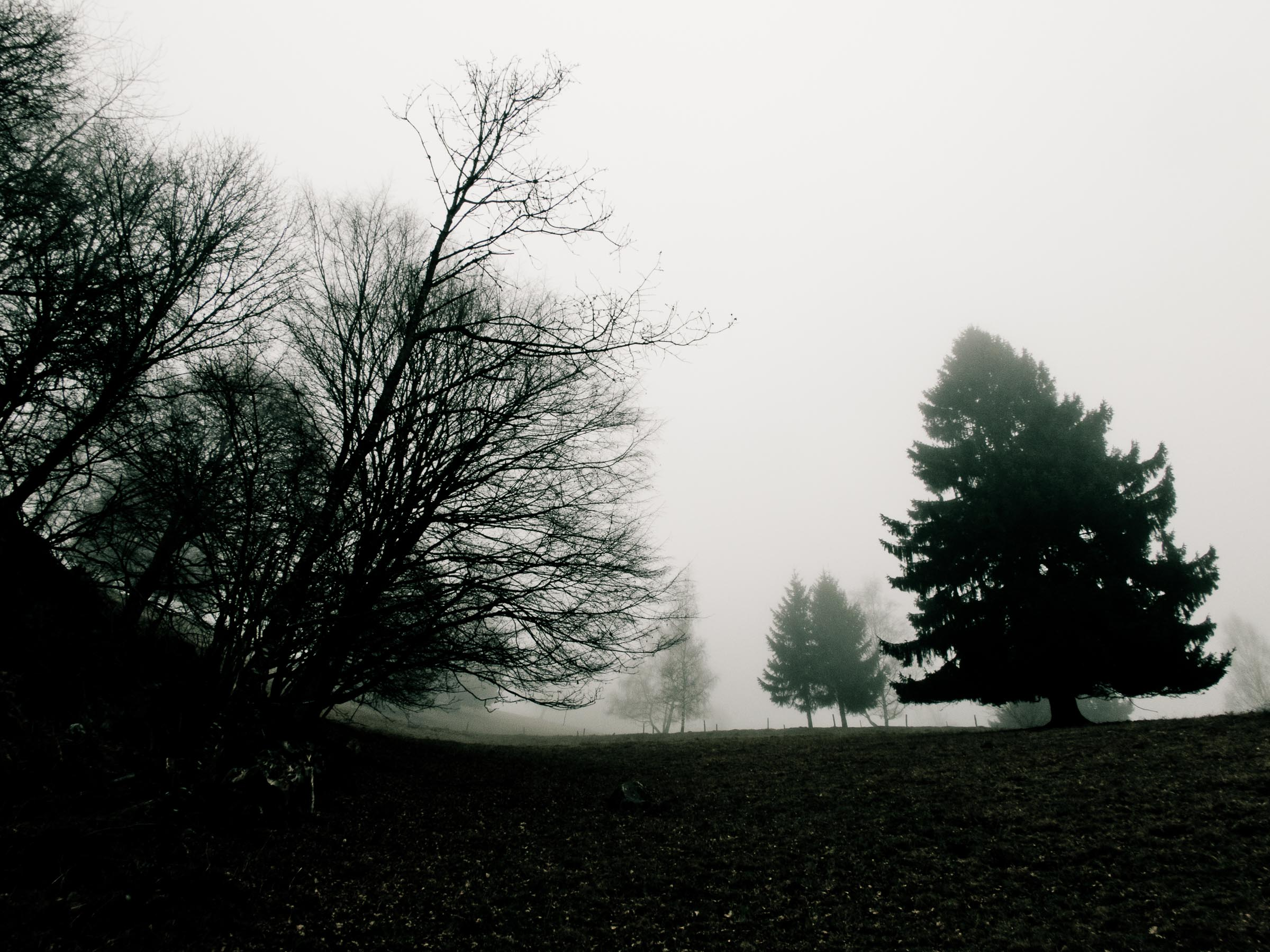 181216_Nebel_Wald_027