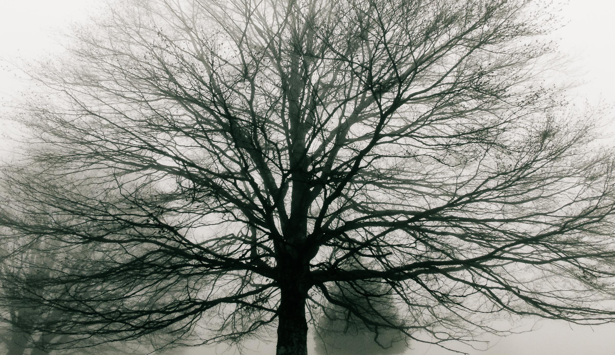 181216_Nebel_Wald_031-2