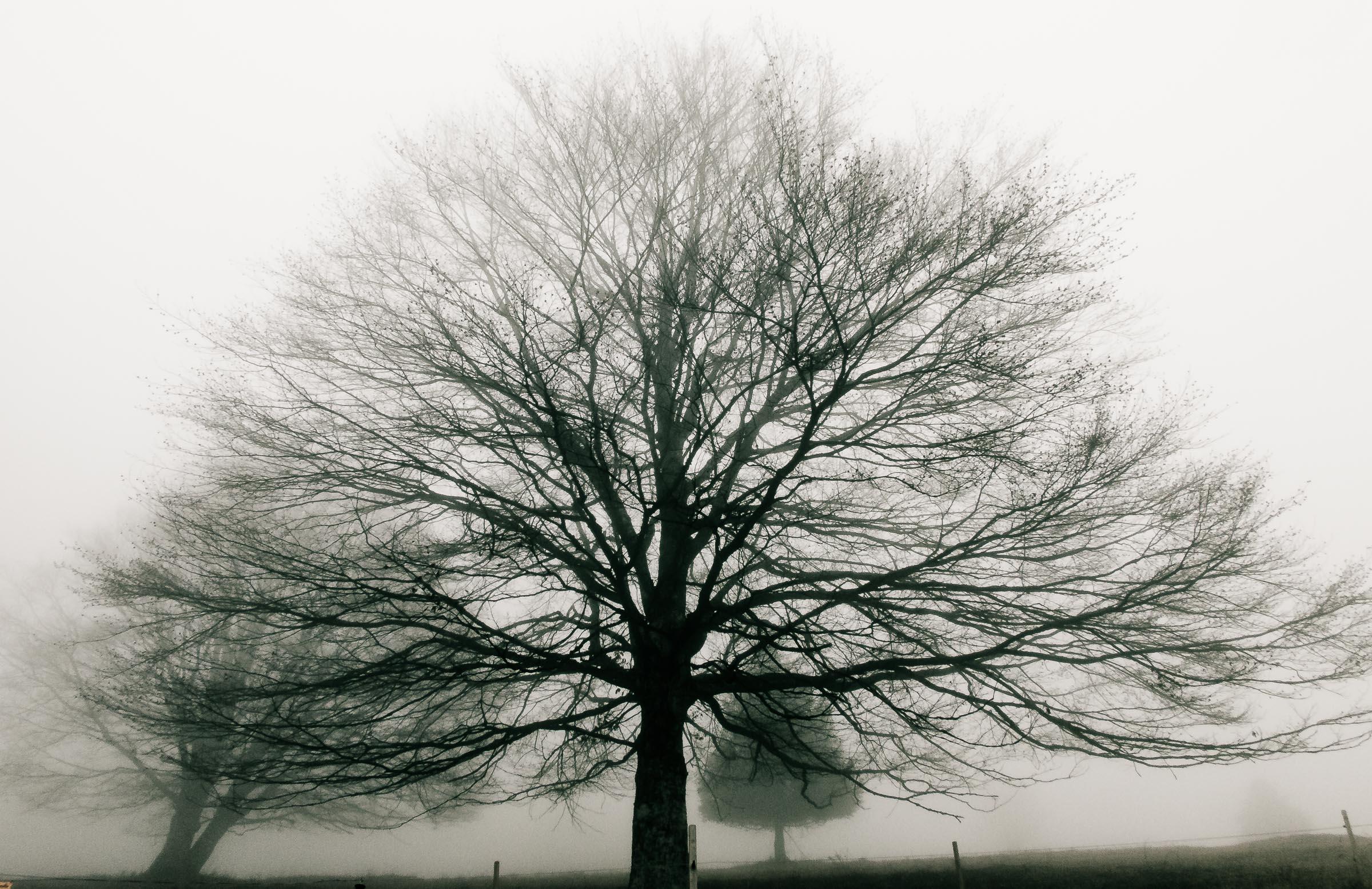 181216_Nebel_Wald_031