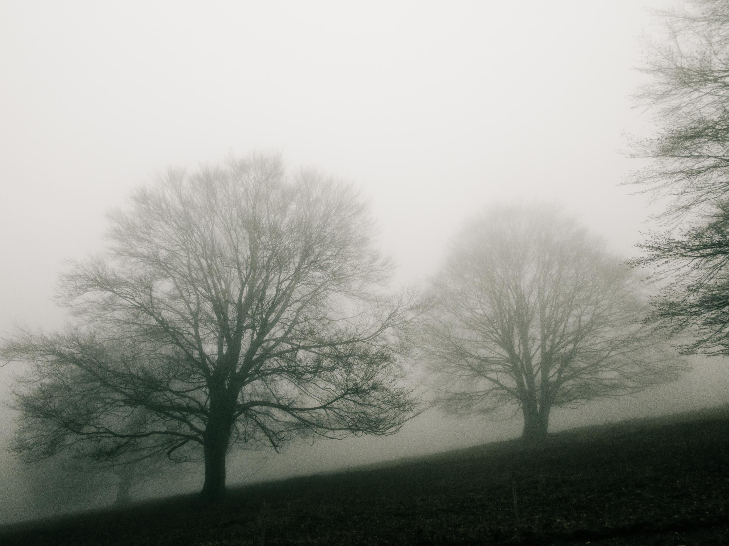 181216_Nebel_Wald_032