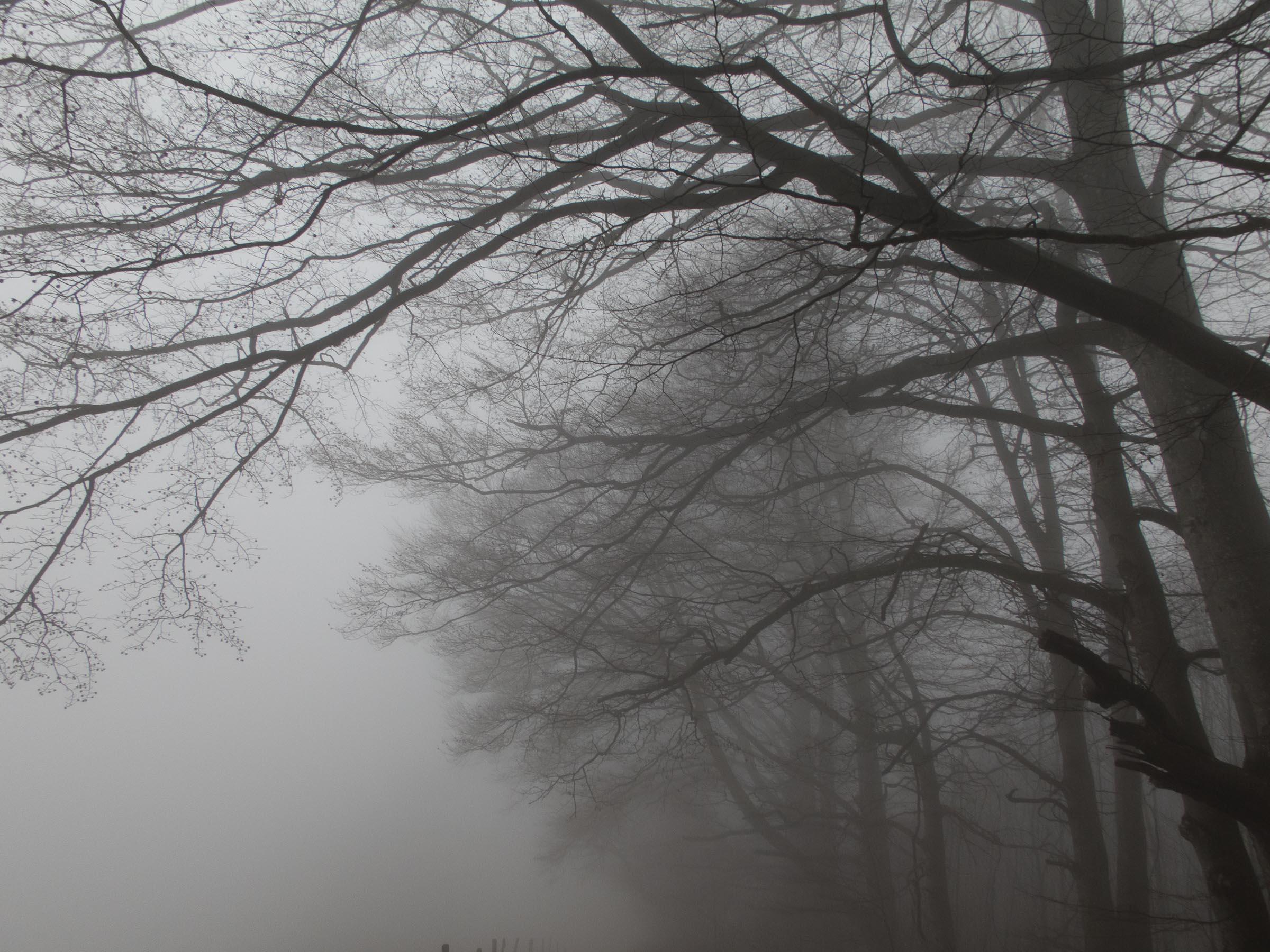 181216_Nebel_Wald_053