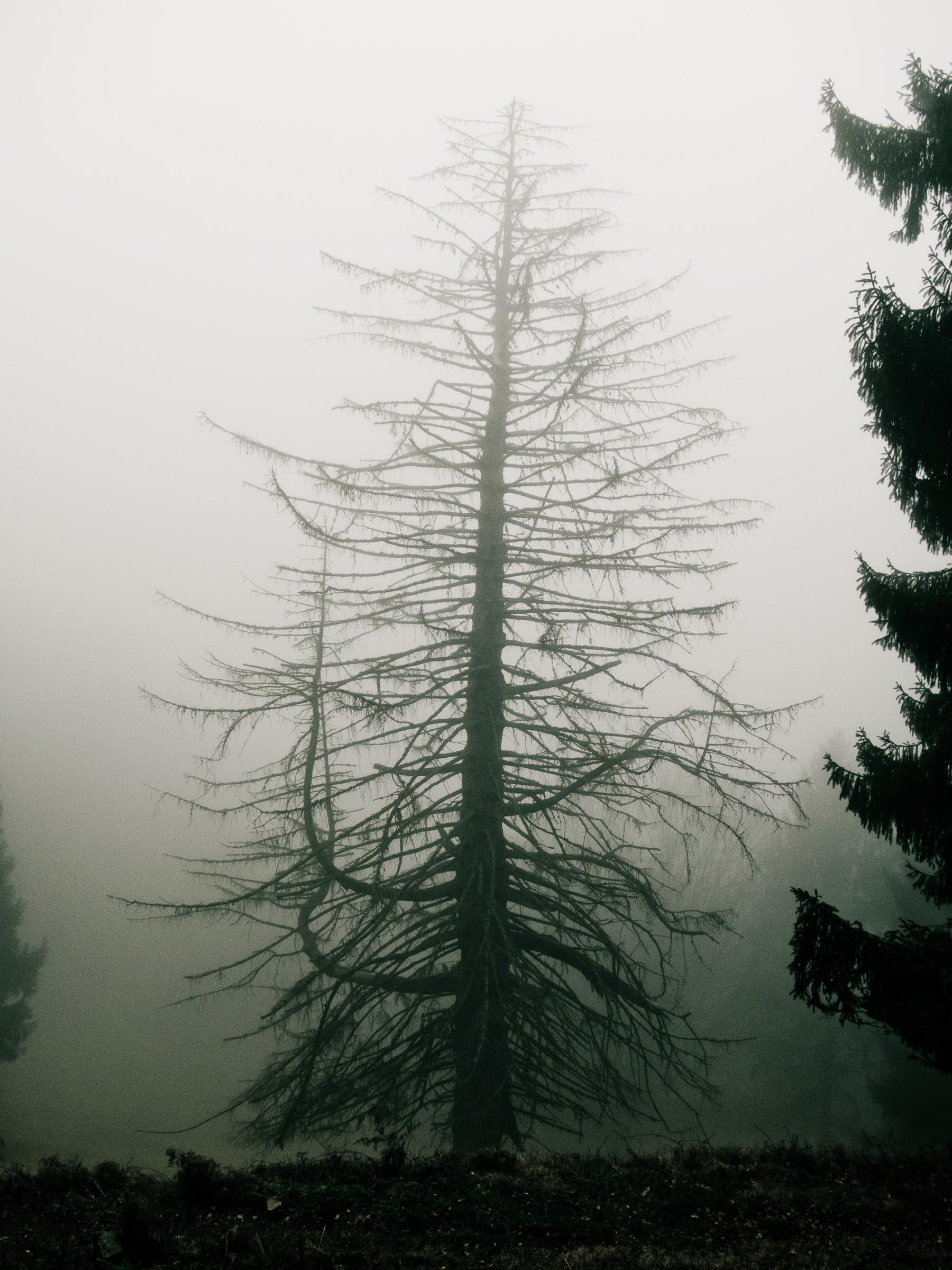 181216_Nebel_Wald_054