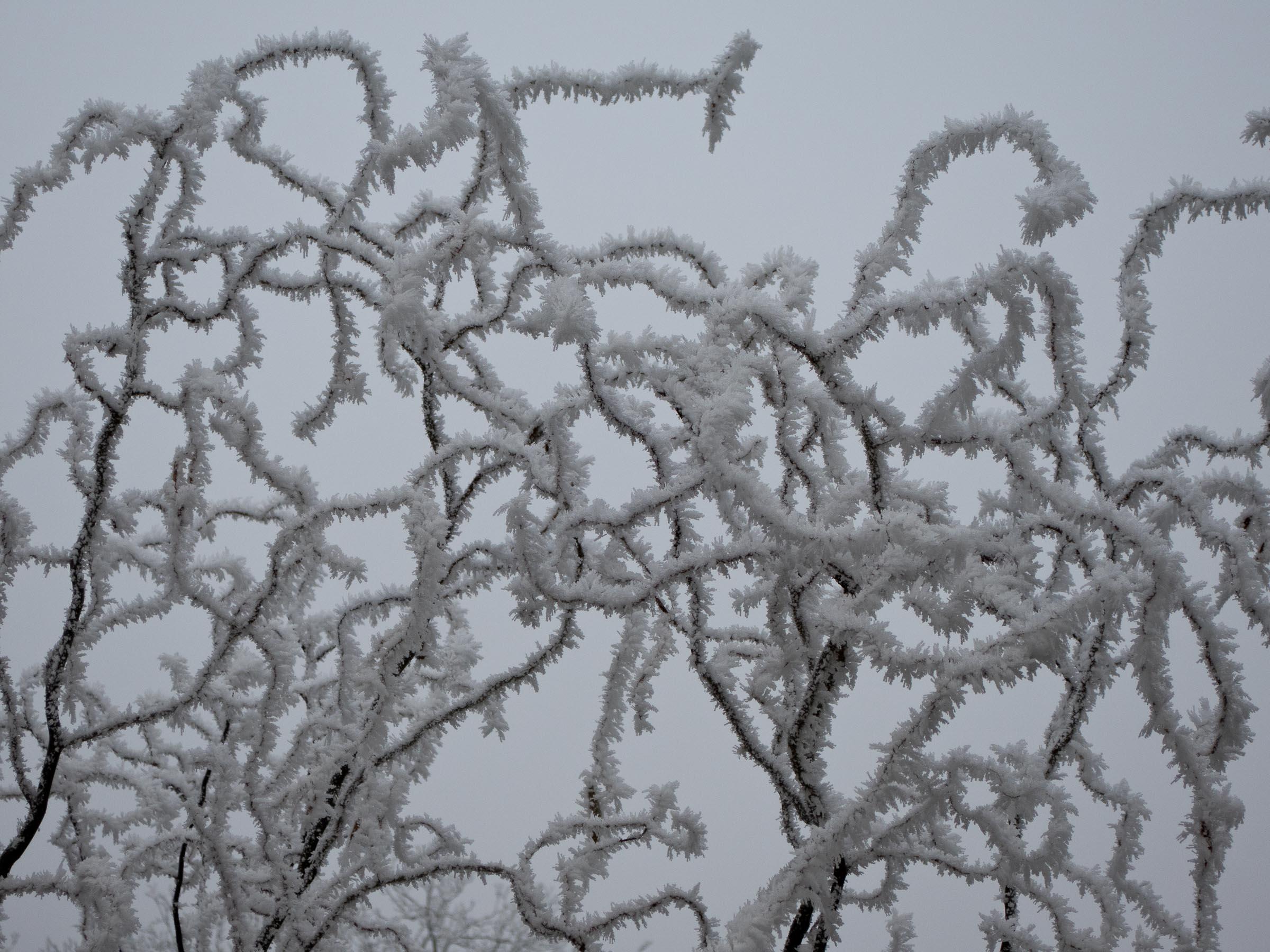311216_Winter-Magic_007