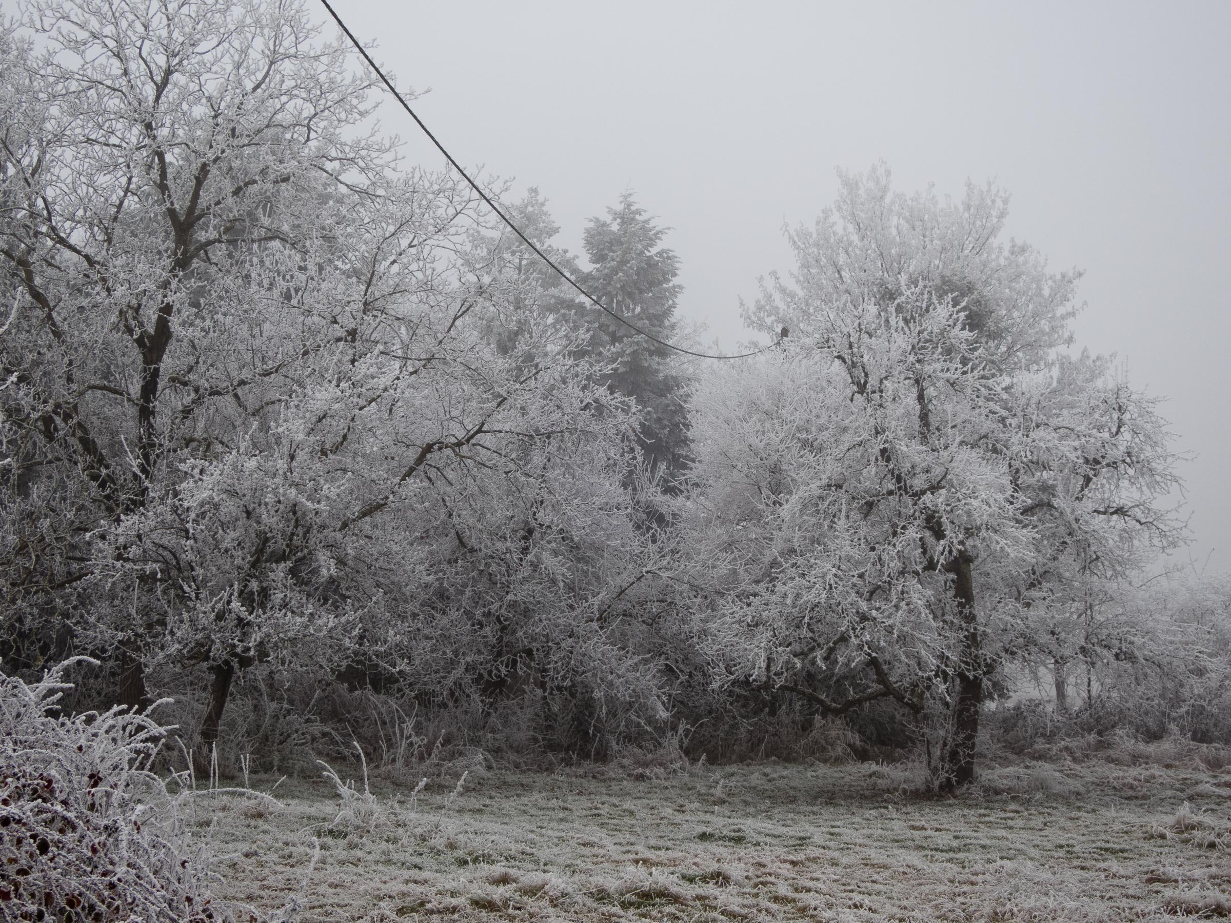 311216_Winter-Magic_008