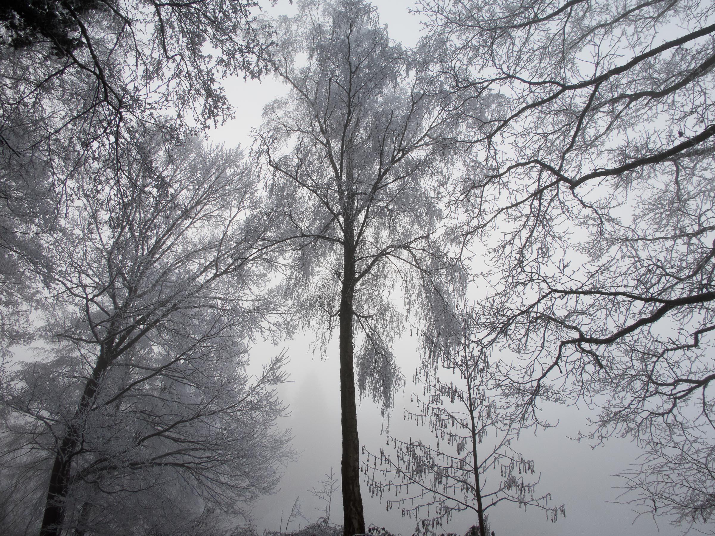311216_Winter-Magic_032